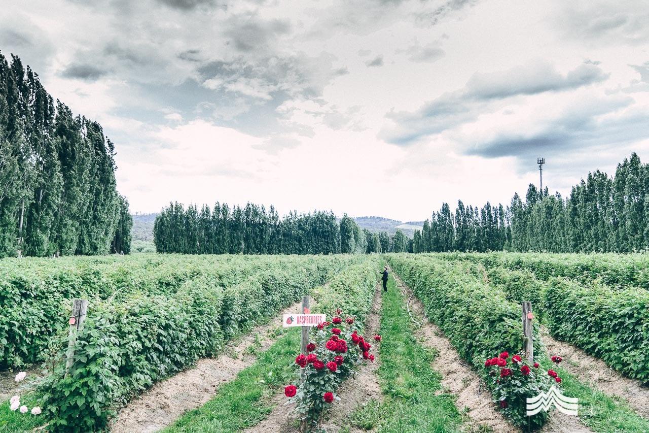 wide view od Westerway Raspberry Farm Tasmania