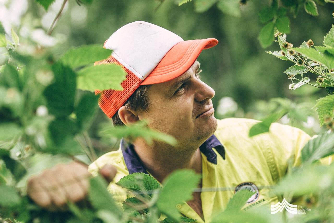 Richard Clark looking at raspberry plants
