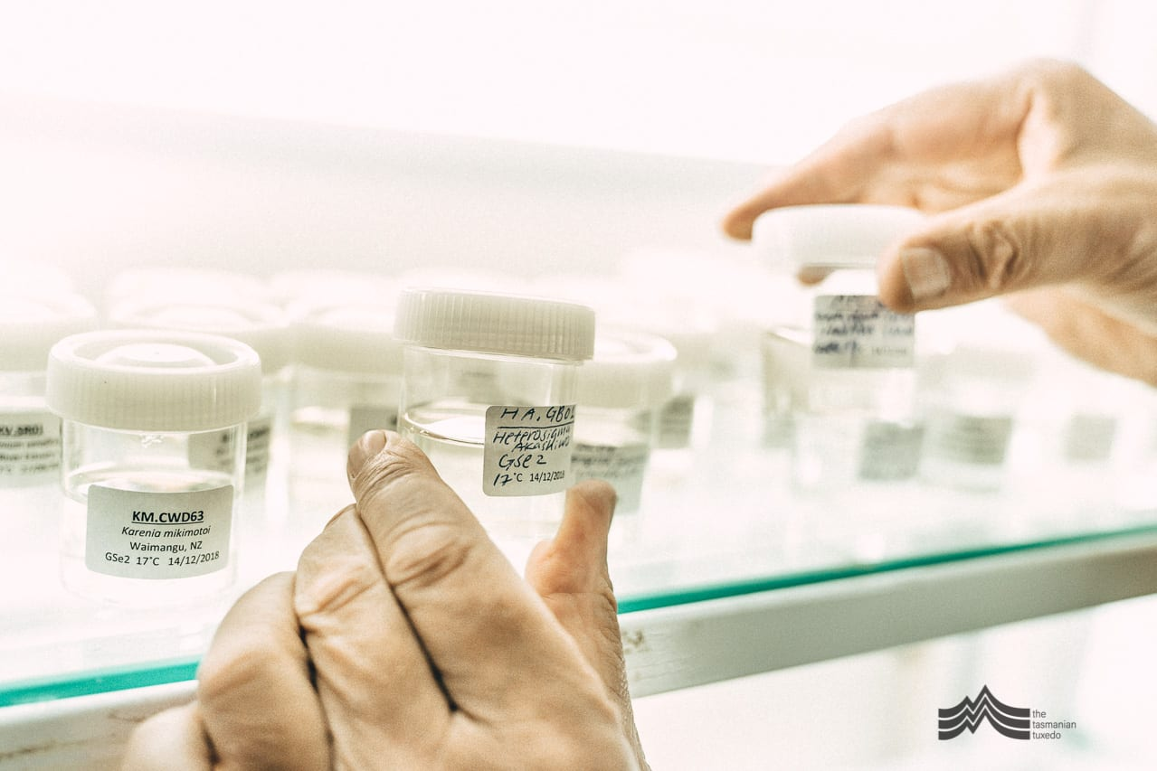 Gustaaf Hallegraeff handling samples in the lab