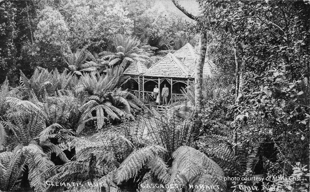 clematis hut on Mount wellington tasmania